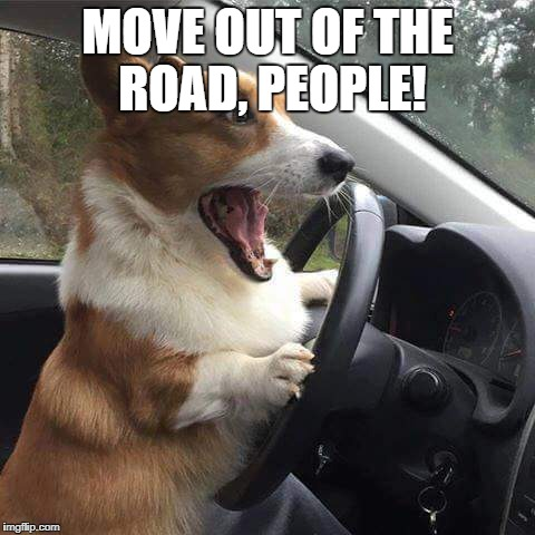 Rage Corgi |  MOVE OUT OF THE ROAD, PEOPLE! | image tagged in rage corgi | made w/ Imgflip meme maker