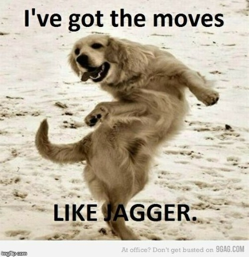 o got the moves | image tagged in dog,dog week | made w/ Imgflip meme maker