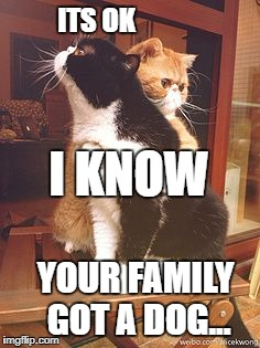 ITS OK I KNOW YOUR FAMILY GOT A DOG... | image tagged in its alright cat version | made w/ Imgflip meme maker