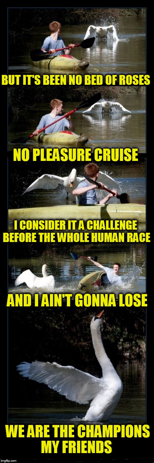 We Are The Champions  | BUT IT'S BEEN NO BED OF ROSES WE ARE THE CHAMPIONS MY FRIENDS NO PLEASURE CRUISE I CONSIDER IT A CHALLENGE BEFORE THE WHOLE HUMAN RACE AND I | image tagged in memes,geese,we are the champions,queen,freddie mercury,songs | made w/ Imgflip meme maker