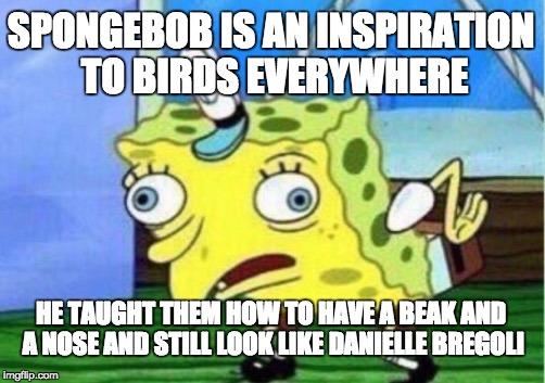 Spongebob bird-cash me ousside |  SPONGEBOB IS AN INSPIRATION TO BIRDS EVERYWHERE; HE TAUGHT THEM HOW TO HAVE A BEAK AND A NOSE AND STILL LOOK LIKE DANIELLE BREGOLI | image tagged in memes,mocking spongebob,cash me ousside how bow dah,birds,inspiration,danielle bregoli | made w/ Imgflip meme maker