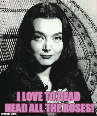 I LOVE TO DEAD HEAD ALL THE ROSES! | image tagged in morticia addams | made w/ Imgflip meme maker