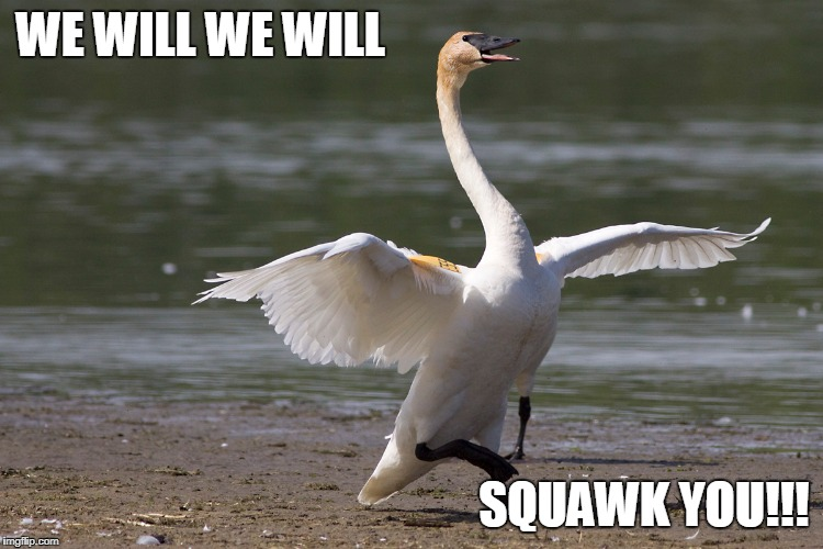 WE WILL WE WILL SQUAWK YOU!!! | made w/ Imgflip meme maker