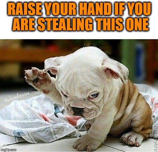 Puppy hand | RAISE YOUR HAND IF YOU ARE STEALING THIS ONE | image tagged in puppy hand | made w/ Imgflip meme maker