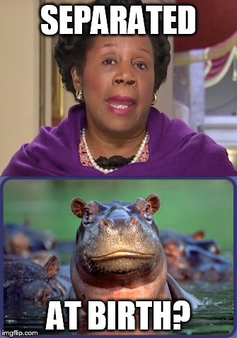 Separated at birth? | SEPARATED AT BIRTH? | image tagged in political meme | made w/ Imgflip meme maker