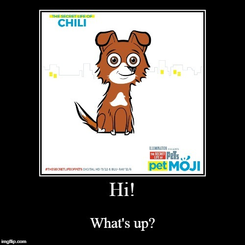 PetMoji | ... | image tagged in petmojis,dogs,chili,border collie | made w/ Imgflip meme maker