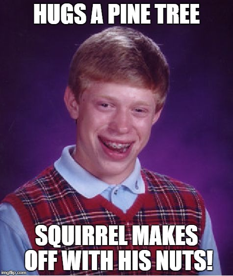 Bad Luck Brian Meme | HUGS A PINE TREE SQUIRREL MAKES OFF WITH HIS NUTS! | image tagged in memes,bad luck brian | made w/ Imgflip meme maker