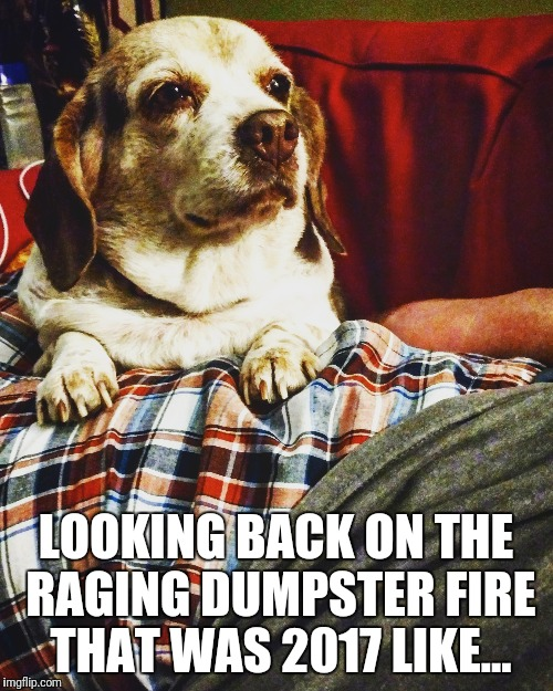LOOKING BACK ON THE RAGING DUMPSTER FIRE THAT WAS 2017 LIKE... | image tagged in 2017,dogs,dumpster fire,new years eve,happy new year | made w/ Imgflip meme maker