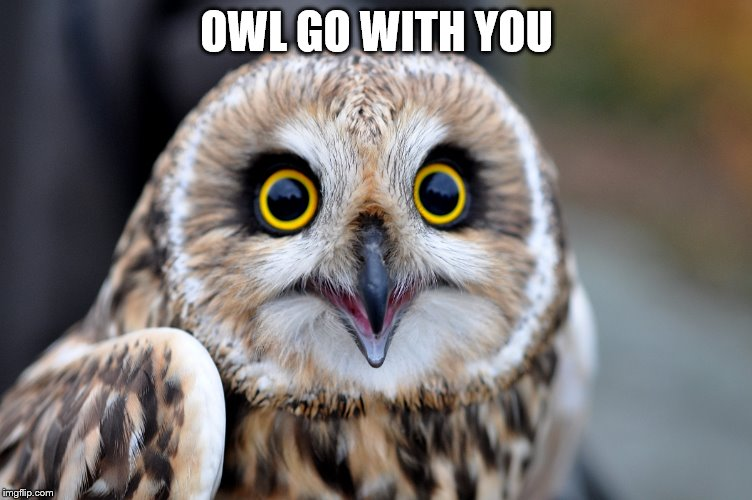OWL GO WITH YOU | made w/ Imgflip meme maker