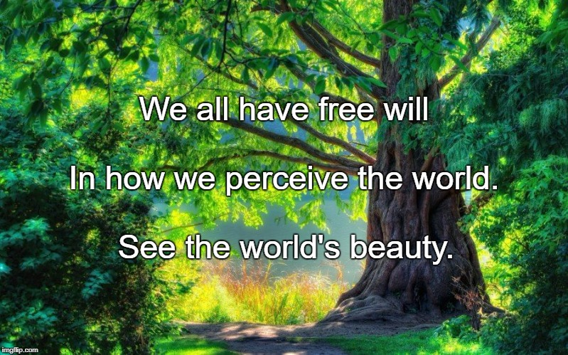 We all have free will See the world's beauty. In how we perceive the world. | image tagged in nature | made w/ Imgflip meme maker