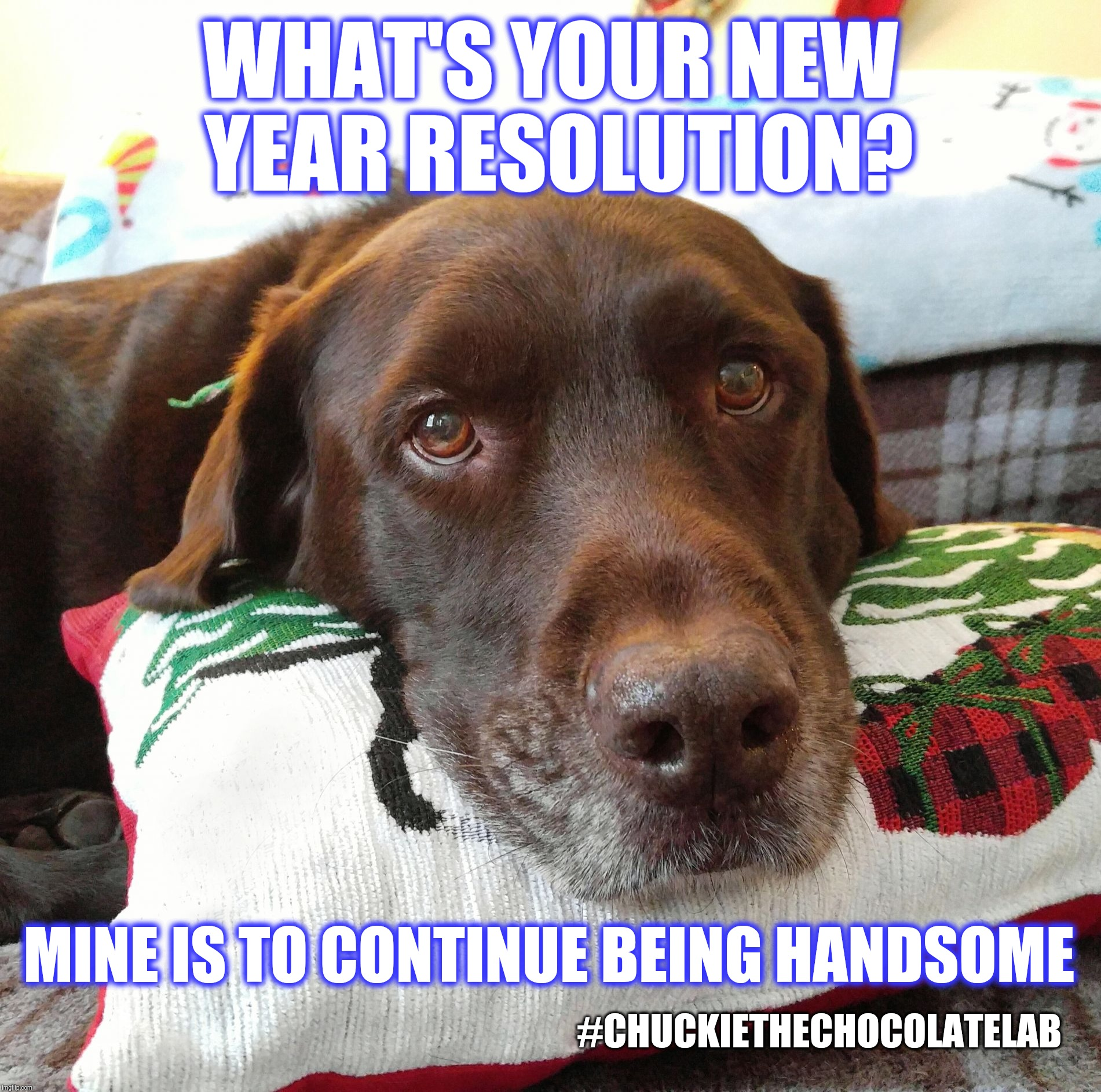 New Year Resolution  | WHAT'S YOUR NEW YEAR RESOLUTION? #CHUCKIETHECHOCOLATELAB MINE IS TO CONTINUE BEING HANDSOME | image tagged in chuckie the chocolate lab teamchuckie,happy new year,resolutions,memes,dogs,funny | made w/ Imgflip meme maker