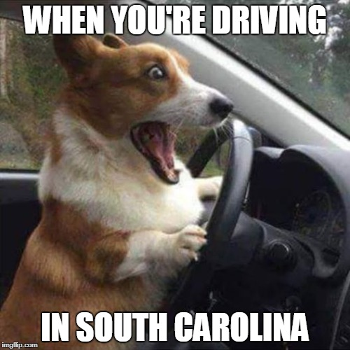 Doggone it! | WHEN YOU'RE DRIVING IN SOUTH CAROLINA | image tagged in excited dog,bad drivers,south carolina | made w/ Imgflip meme maker
