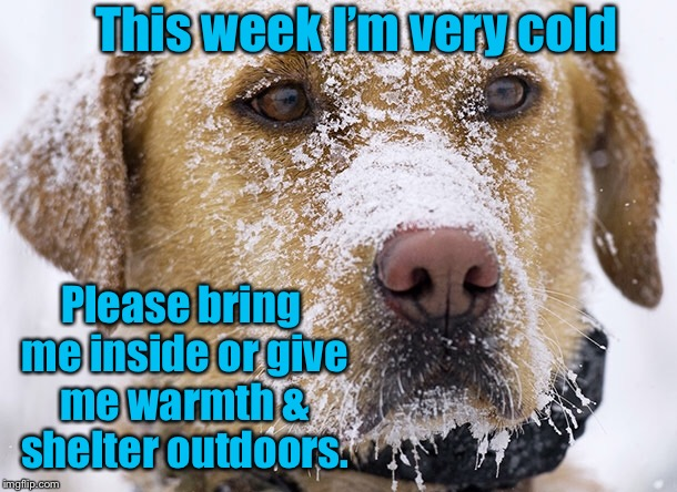 Please think about your pets this week |  This week I'm very cold; Please bring me inside or give me warmth & shelter outdoors. | image tagged in memes,pets,cold,bring inside | made w/ Imgflip meme maker
