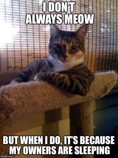 The Most Interesting Cat In The World Meme | I DON'T ALWAYS MEOW BUT WHEN I DO, IT'S BECAUSE MY OWNERS ARE SLEEPING | image tagged in memes,the most interesting cat in the world | made w/ Imgflip meme maker