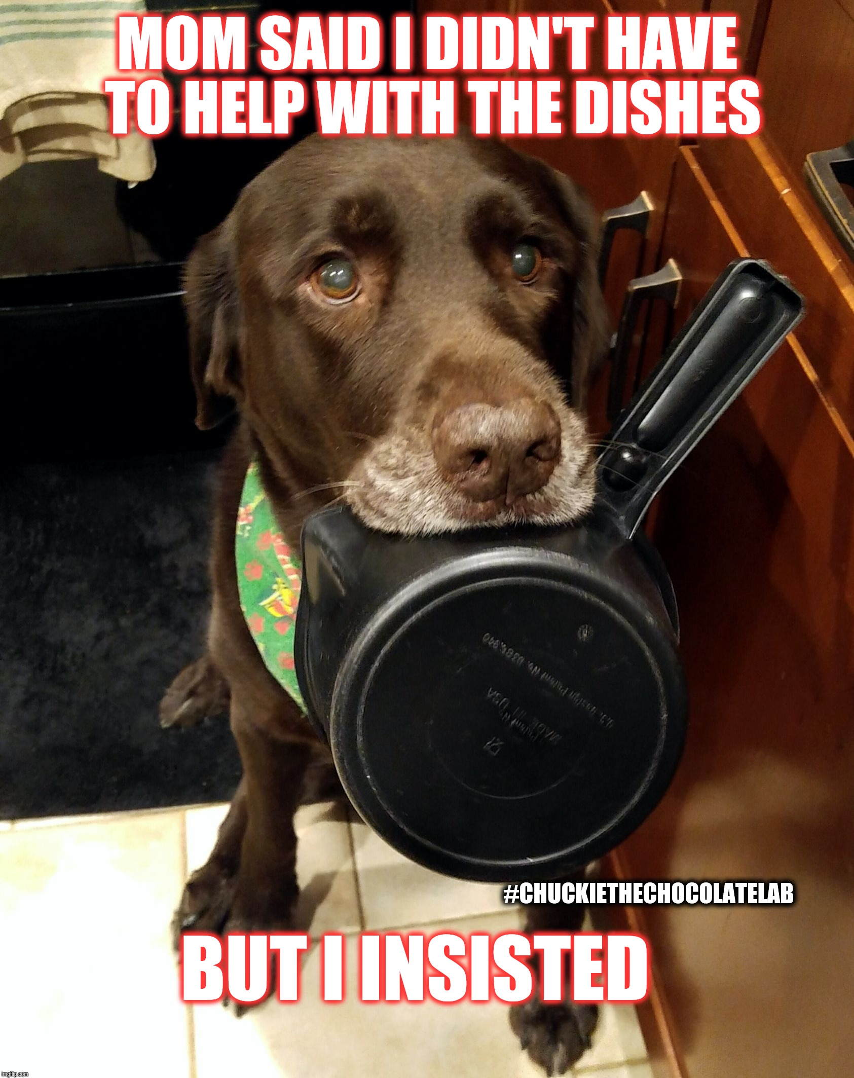 Helping with the dishes | MOM SAID I DIDN'T HAVE TO HELP WITH THE DISHES BUT I INSISTED #CHUCKIETHECHOCOLATELAB | image tagged in chuckie the chocolate lab teamchuckie,funny,memes,cute,dogs,dishes | made w/ Imgflip meme maker