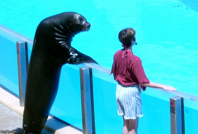 Seal gets the girl | . | image tagged in seal gets the girl | made w/ Imgflip meme maker
