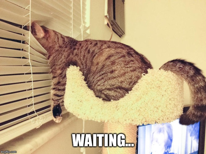 WAITING... | made w/ Imgflip meme maker
