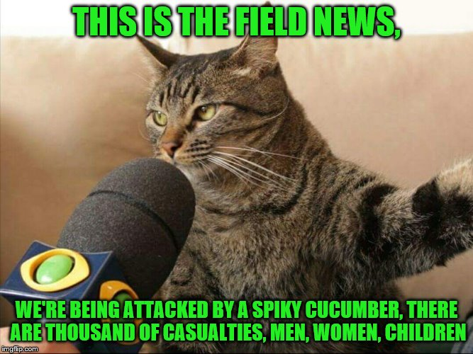THIS IS THE FIELD NEWS, WE'RE BEING ATTACKED BY A SPIKY CUCUMBER, THERE ARE THOUSAND OF CASUALTIES, MEN, WOMEN, CHILDREN | made w/ Imgflip meme maker