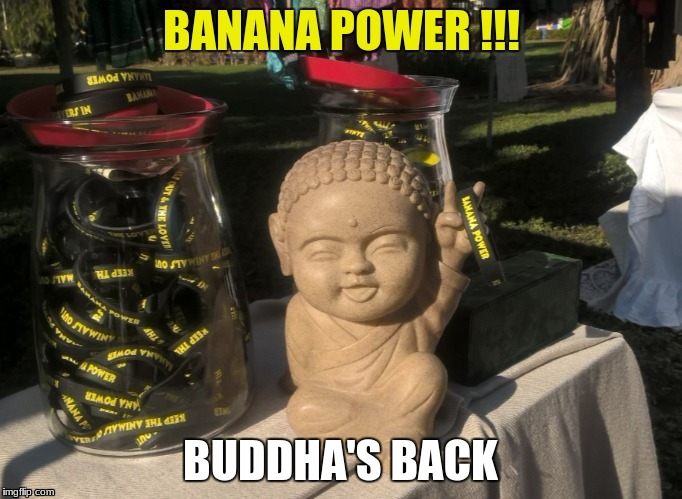 BUDDHA'S BACK | made w/ Imgflip meme maker