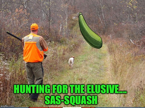 HUNTING FOR THE ELUSIVE.... SAS-SQUASH | made w/ Imgflip meme maker