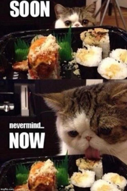 Sushi Cat | SOON NEVER MIND... NOW | image tagged in memes,sushi cat | made w/ Imgflip meme maker
