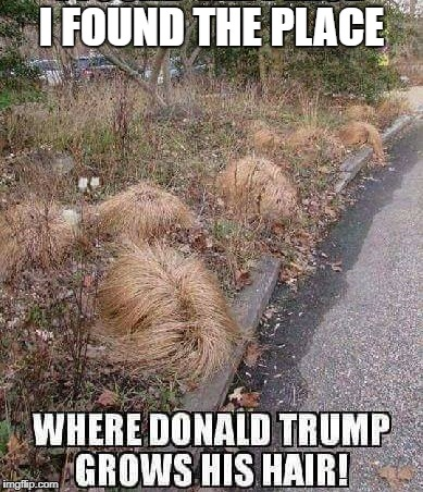 where donald trump grows his hair | I FOUND THE PLACE | image tagged in donald trump | made w/ Imgflip meme maker