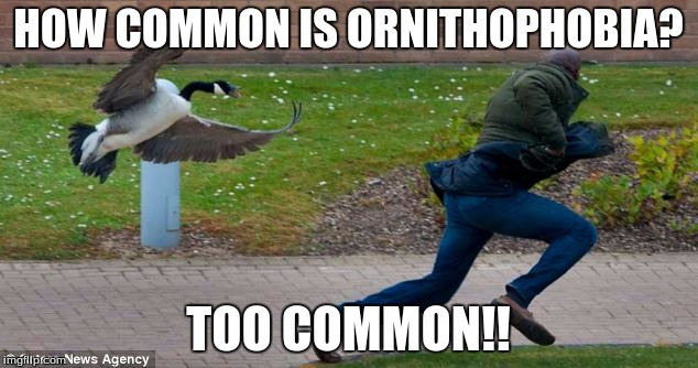 ornithophobia meme | HOW COMMON IS ORNITHOPHOBIA? TOO COMMON!! | image tagged in angry birds,first world problems | made w/ Imgflip meme maker