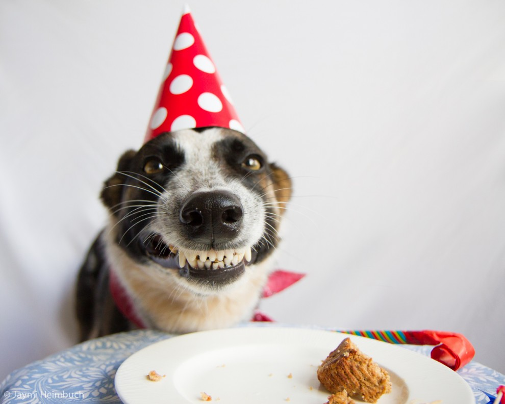 Birthday Dog Meme Template