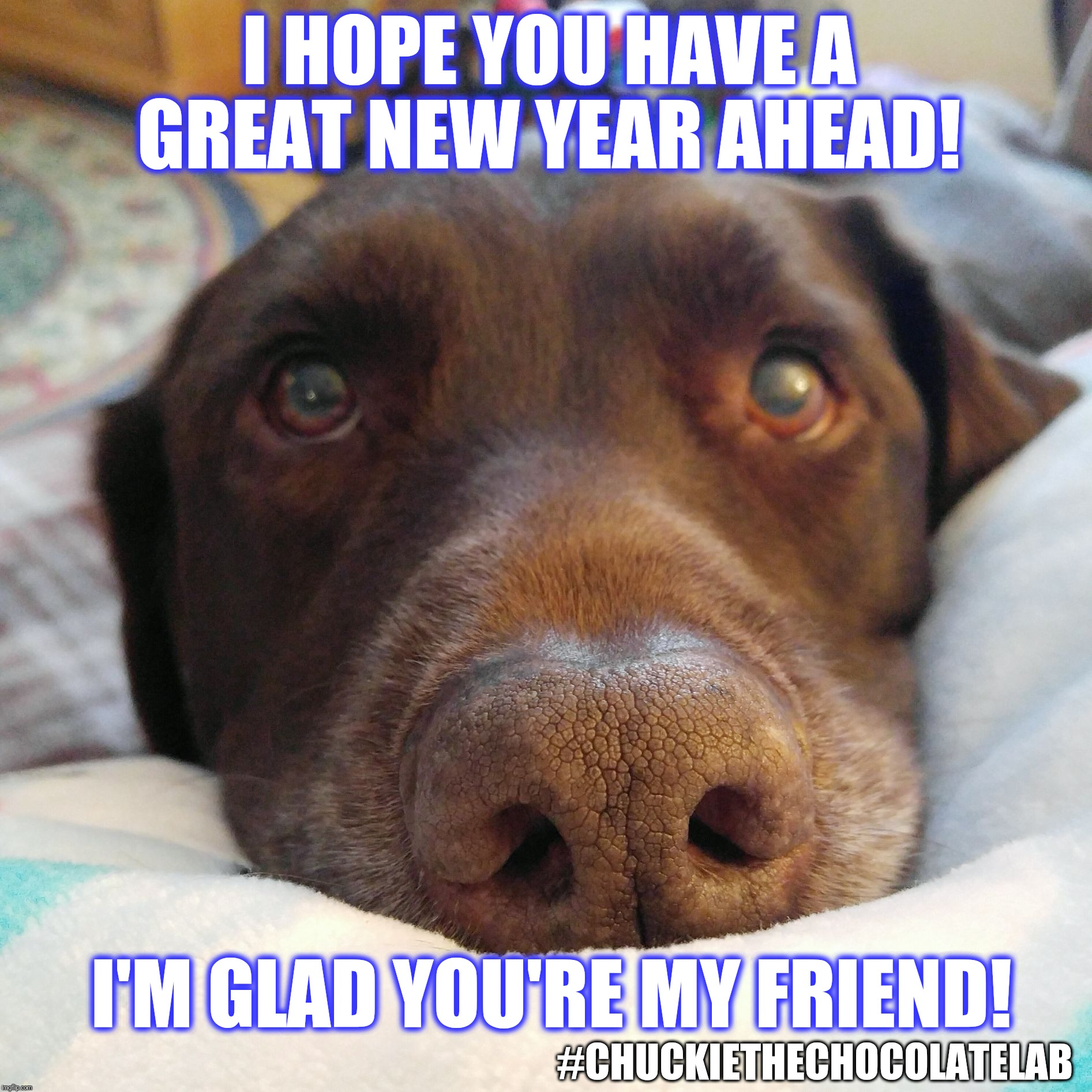 Have a great new year, friends!  | I HOPE YOU HAVE A GREAT NEW YEAR AHEAD! I'M GLAD YOU'RE MY FRIEND! #CHUCKIETHECHOCOLATELAB | image tagged in chuckie the chocolate lab teamchuckie,friends,new year,memes,dogs | made w/ Imgflip meme maker