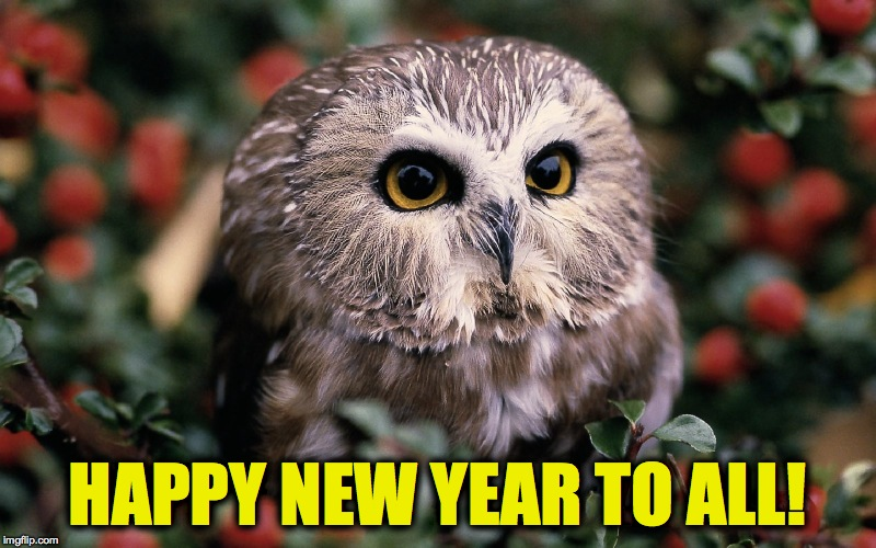 2018 :-) Hoping For A Better Year For Everybody! | HAPPY NEW YEAR TO ALL! | image tagged in saw whet owl | made w/ Imgflip meme maker