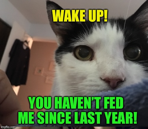 Needy cat :-) | WAKE UP! YOU HAVEN'T FED ME SINCE LAST YEAR! | image tagged in memes,new years,cat,feed me | made w/ Imgflip meme maker