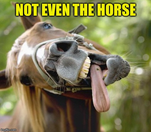 NOT EVEN THE HORSE | made w/ Imgflip meme maker