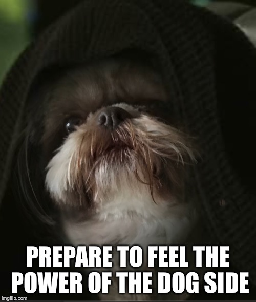 PREPARE TO FEEL THE POWER OF THE DOG SIDE | image tagged in darth shi-tzu | made w/ Imgflip meme maker