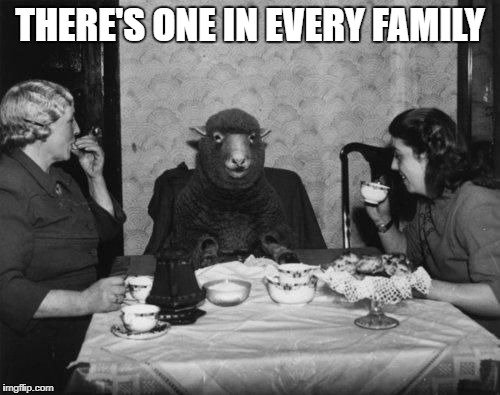 So, Have You Any Wool? | THERE'S ONE IN EVERY FAMILY | image tagged in memes,meme,funny,black sheep,vintage | made w/ Imgflip meme maker