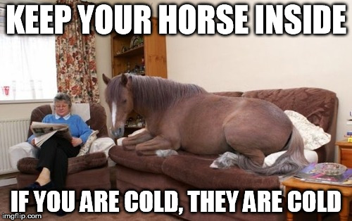 If you are cold they are cold | KEEP YOUR HORSE INSIDE IF YOU ARE COLD, THEY ARE COLD | image tagged in horse,house,couch | made w/ Imgflip meme maker