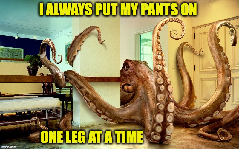 Cephalopod Logic | I ALWAYS PUT MY PANTS ON ONE LEG AT A TIME | image tagged in octopus in the room | made w/ Imgflip meme maker
