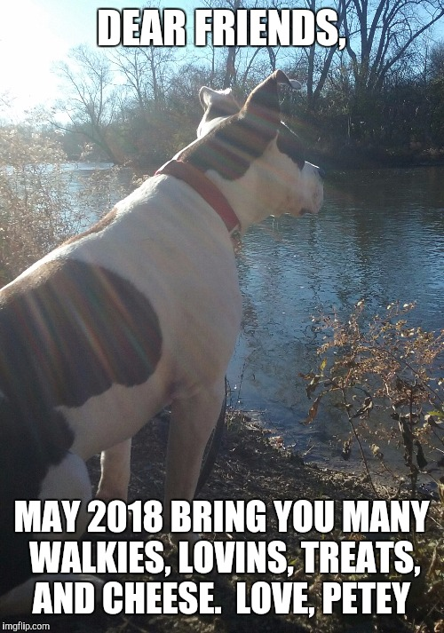 DEAR FRIENDS, MAY 2018 BRING YOU MANY WALKIES, LOVINS, TREATS, AND CHEESE.  LOVE, PETEY | image tagged in 2018 | made w/ Imgflip meme maker