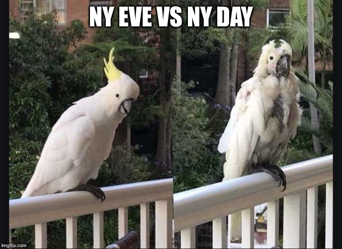 NY EVE VS NY DAY | image tagged in nyevsnyd | made w/ Imgflip meme maker