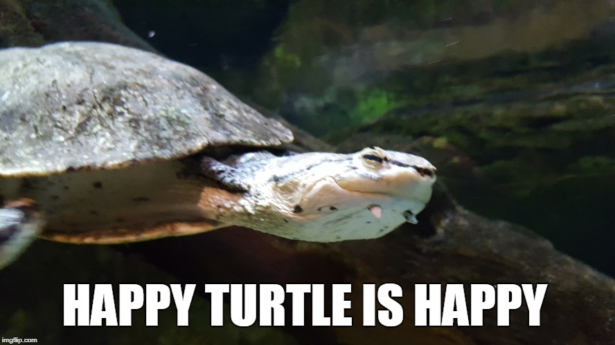 Happy Turtle is Happy | HAPPY TURTLE IS HAPPY | image tagged in happy turtle,happy,turtle,aquarium | made w/ Imgflip meme maker