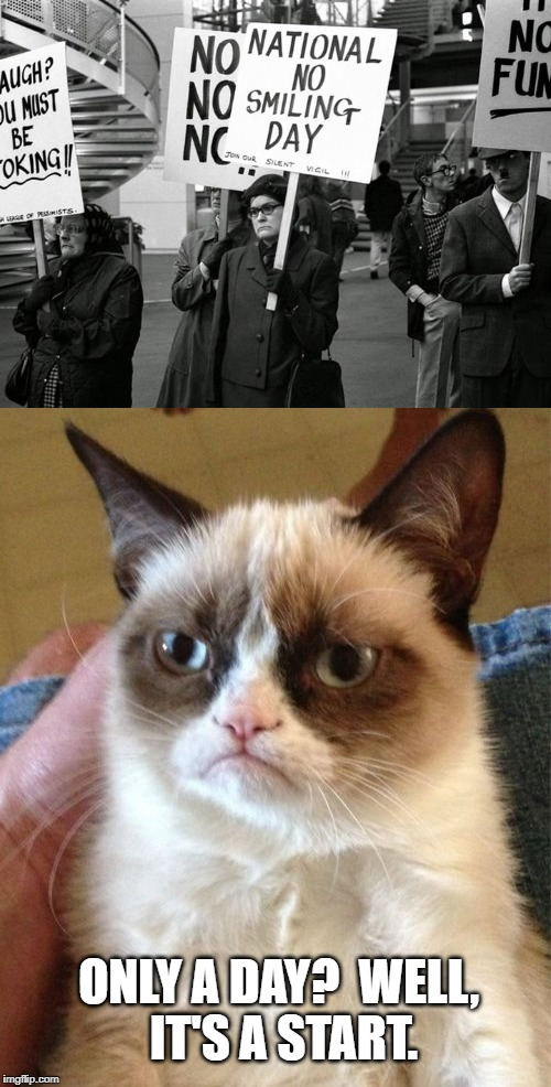 Grumpy Cat | ONLY A DAY?  WELL, IT'S A START. | image tagged in grumpy cat,memes,meme,funny,protest | made w/ Imgflip meme maker