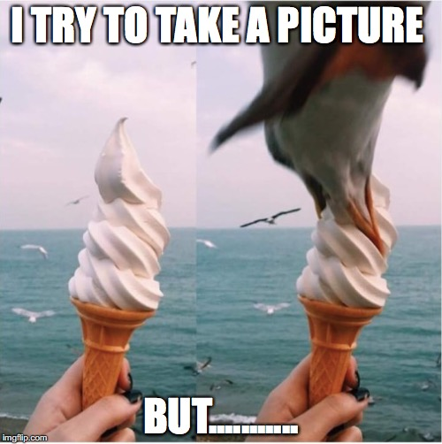 When Nature gets in the way | I TRY TO TAKE A PICTURE BUT........... | image tagged in ice cream,funny,funny memes,memes,funny picture,birds | made w/ Imgflip meme maker