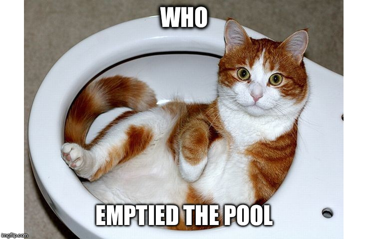 Funny Cat |  WHO; EMPTIED THE POOL | image tagged in funny cat | made w/ Imgflip meme maker