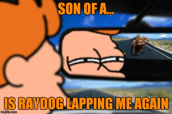 When you start to feel like you've made a lot of points on imgflip... |  SON OF A... IS RAYDOG LAPPING ME AGAIN | image tagged in fry not sure car version,raydog,passing,again | made w/ Imgflip meme maker