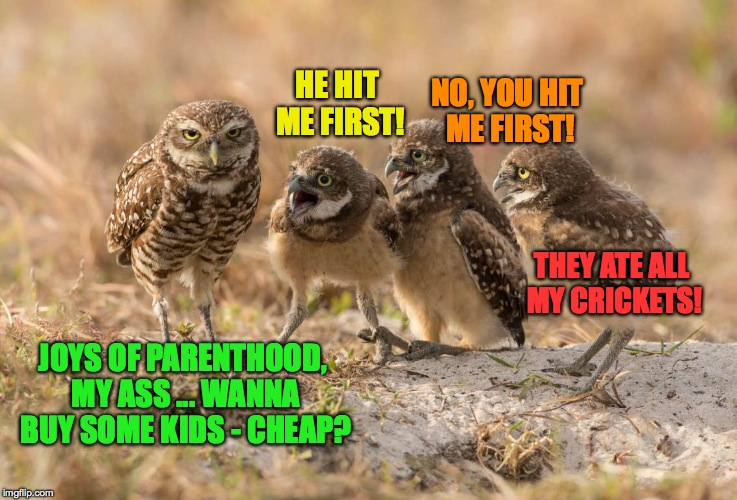Joys Of Parenthood | HE HIT ME FIRST! NO, YOU HIT ME FIRST! THEY ATE ALL MY CRICKETS! JOYS OF PARENTHOOD, MY ASS ... WANNA BUY SOME KIDS - CHEAP? | image tagged in buy kids cheap | made w/ Imgflip meme maker