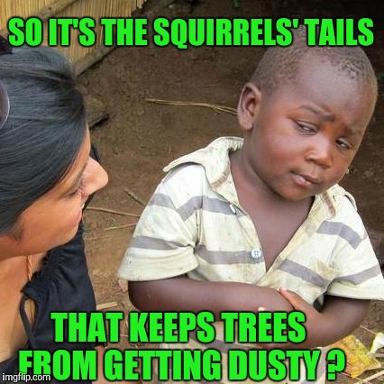 Hey, Would I Lie ?! | SO IT'S THE SQUIRRELS' TAILS THAT KEEPS TREES FROM GETTING DUSTY ? | image tagged in memes,third world skeptical kid | made w/ Imgflip meme maker