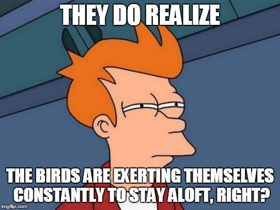 Futurama Fry Meme | THEY DO REALIZE THE BIRDS ARE EXERTING THEMSELVES CONSTANTLY TO STAY ALOFT, RIGHT? | image tagged in memes,futurama fry | made w/ Imgflip meme maker