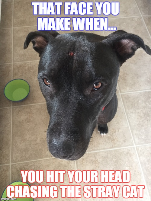 Raider Meme |  THAT FACE YOU MAKE WHEN... YOU HIT YOUR HEAD CHASING THE STRAY CAT | image tagged in chasing | made w/ Imgflip meme maker