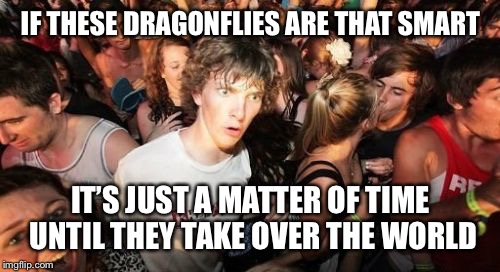 IF THESE DRAGONFLIES ARE THAT SMART IT'S JUST A MATTER OF TIME UNTIL THEY TAKE OVER THE WORLD | made w/ Imgflip meme maker