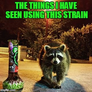 THE THINGS I HAVE SEEN USING THIS STRAIN | made w/ Imgflip meme maker