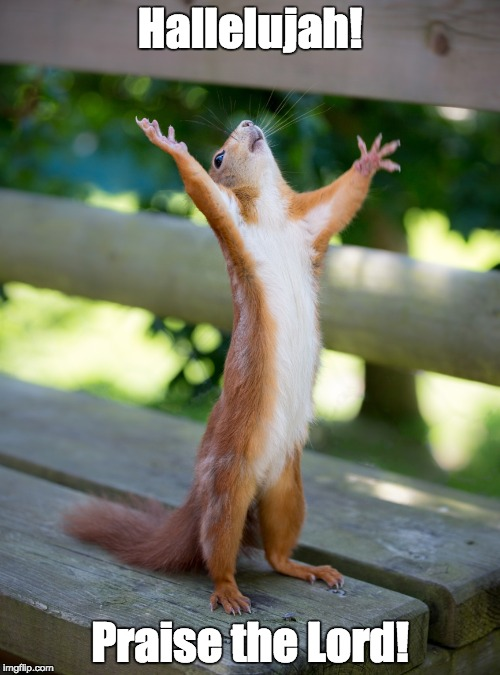 Hallelujah! Praise the Lord! | Hallelujah! Praise the Lord! | image tagged in hallelujah,squirrel,praise the lord | made w/ Imgflip meme maker
